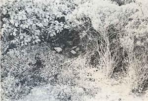 Piedras de la bóveda del edificio